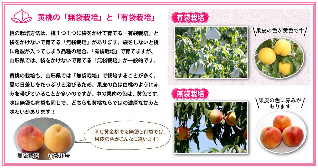 無袋栽培と有袋栽培