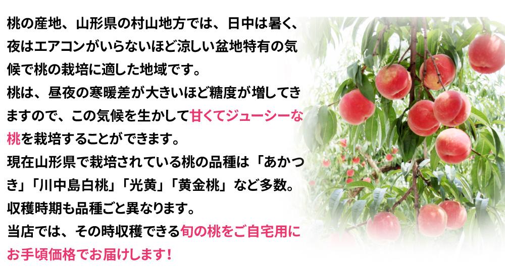 大人気山形の桃