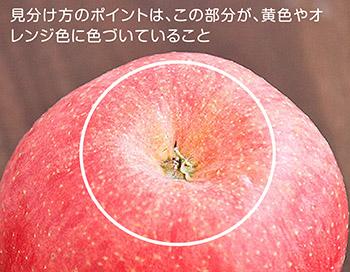 サンふじの蜜入りの見  分け方
