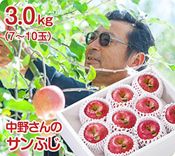 中野さんのサンふじ(51-I)