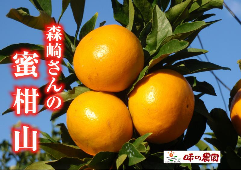 森崎さんの密柑山