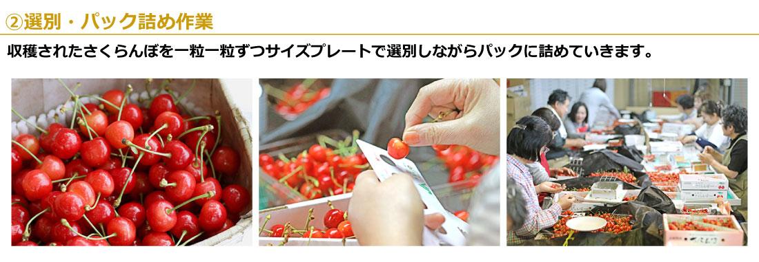02選別・パック詰め作業