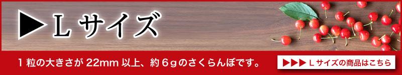 佐藤錦Lサイズ