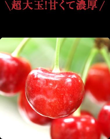 超大玉!甘くて濃厚 紅てまり