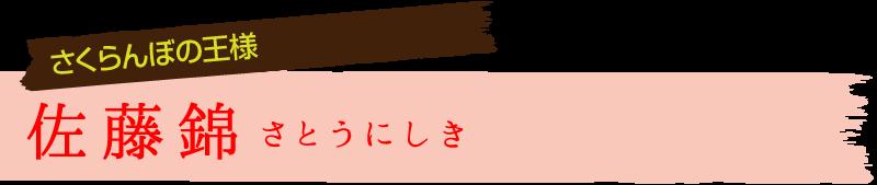 さくらんぼの王様 佐藤錦