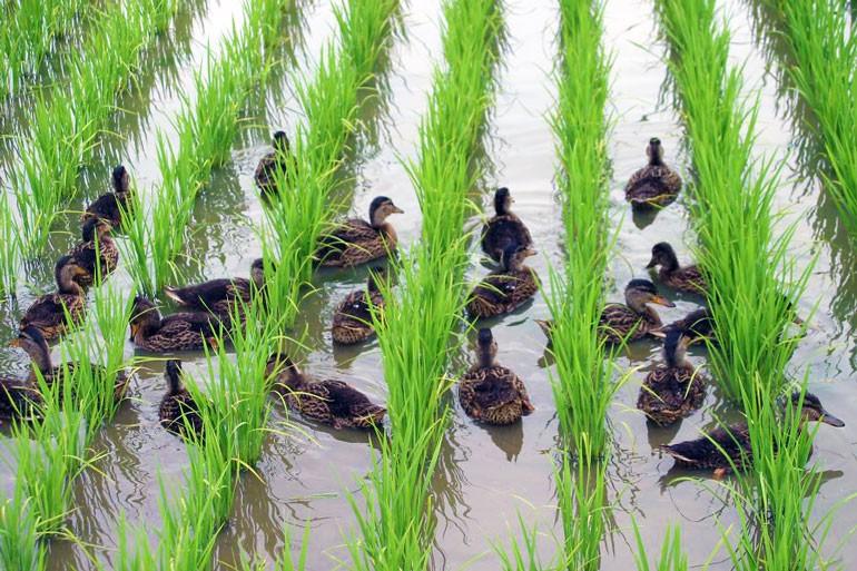 山形米 つや姫 山形のお米