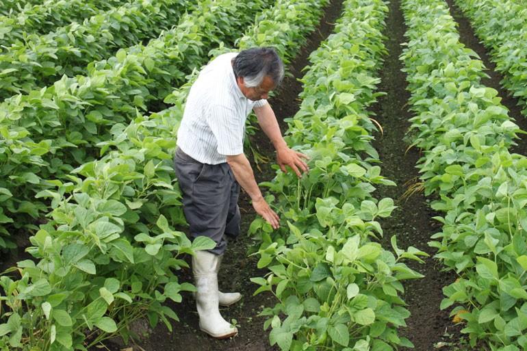 だだちゃ豆 栽培 白山