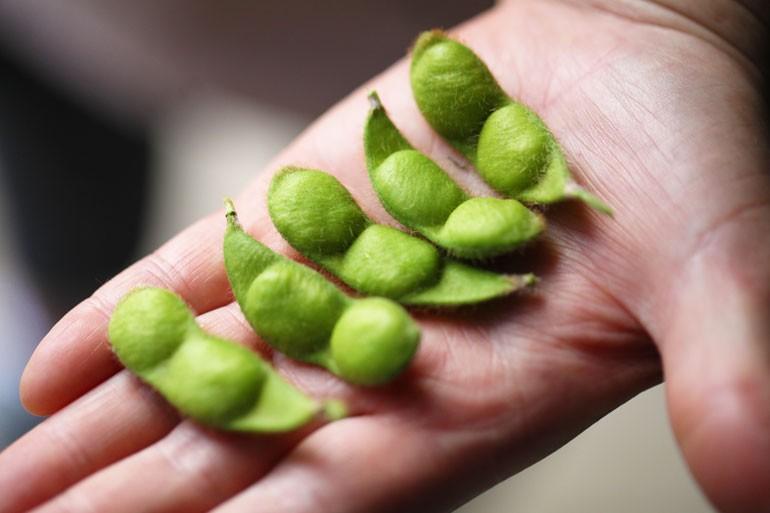 殿様のだだちゃ豆 だだちゃ豆通販 白山だだちゃ豆