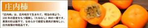 庄内柿 種なし柿 柿