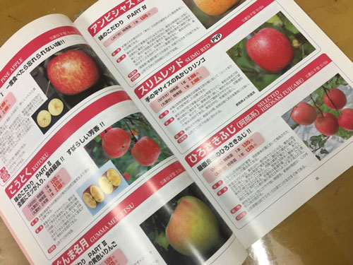 こうとく りんご 蜜入り