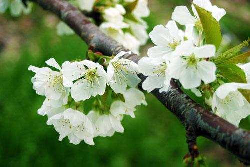 豊作祈願 花見 夜桜