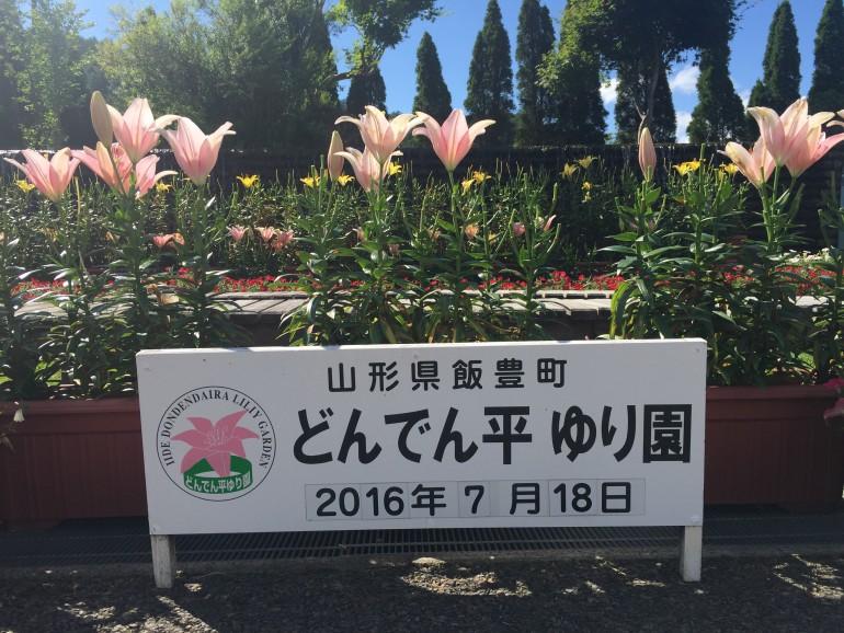 7haの広大な敷地に50万本のユリが咲く