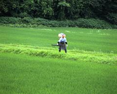 エンジン式の肥料散布機を使い田んぼいっぱいに均等にまきます