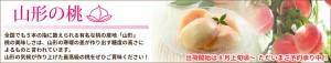 黄桃 白桃 山形桃