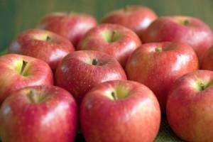 リンゴ通販 山形リンゴ 蜜入りリンゴ