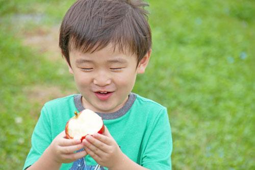 りんご通販 サンふじ通販 ふじりんご
