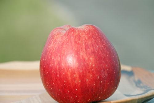 蜜入りりんご通販 蜜入りこうとく こうとく通販