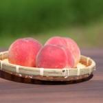 山形の桃 桃通販 白桃