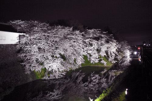 山形の桜 山形さくら 山形サクランボ