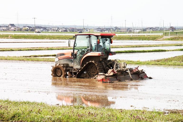 お米の作り方 はえぬき つや姫    田んぼの表面が出来るだけ平坦になるようにドロドロの土を均します