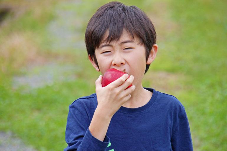 昂林(こうりん) 蜜入りリンゴ りんご通販