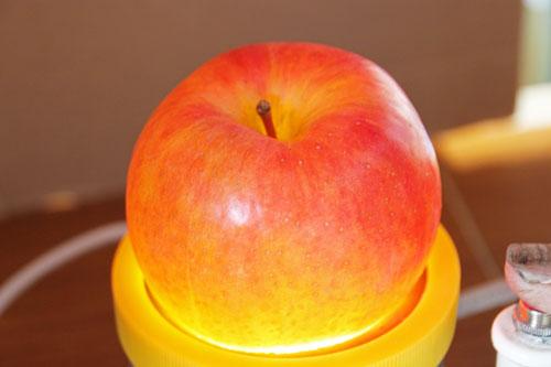 蜜姫こうとく 山形りんご こうとく通販