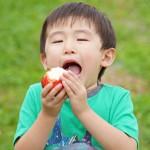 蜜入りりんご 蜜入りこうとく 早生ふじ