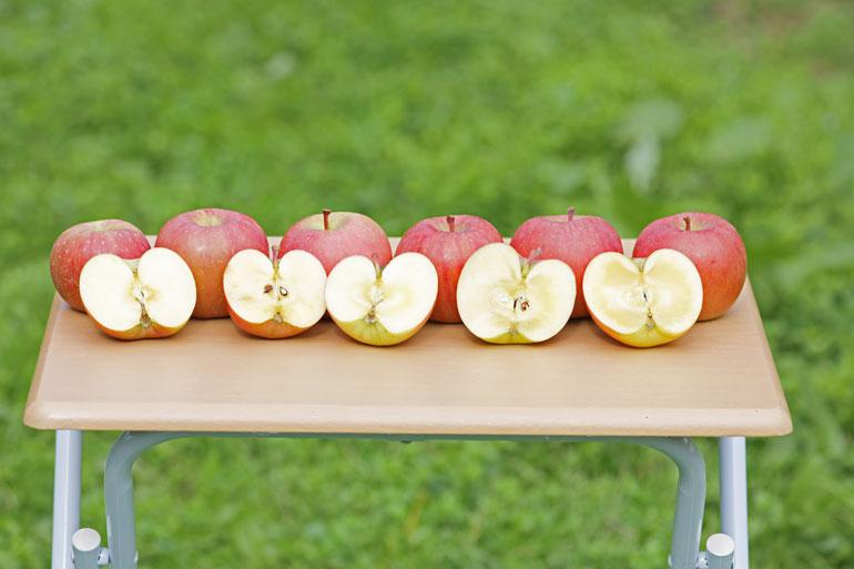 りんご通販 リンゴ通販 ふじりんご
