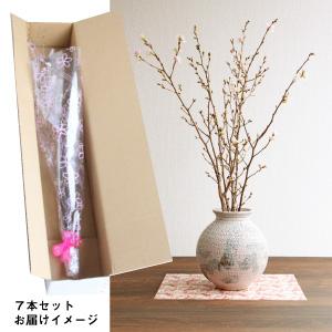 啓翁桜7本セット(1月~3月お届け)