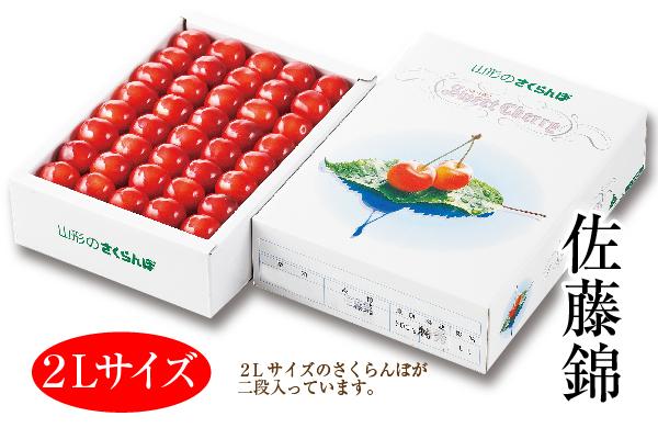 温室さくらんぼ佐藤錦 化粧箱 約500g 2Lサイズ