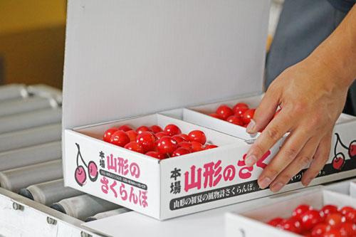 さくらんぼ佐藤錦 山形さくらんぼ サクランボ通販