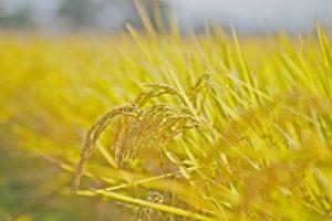 玄米 玄米食 玄米がゆ